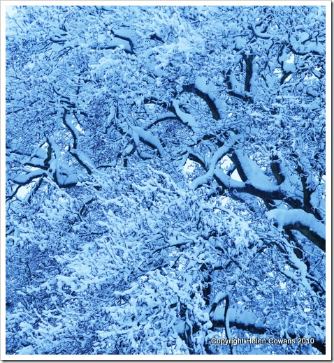 blue trees2