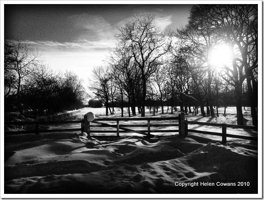 gate in snow BW