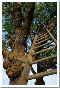 ladder fruit