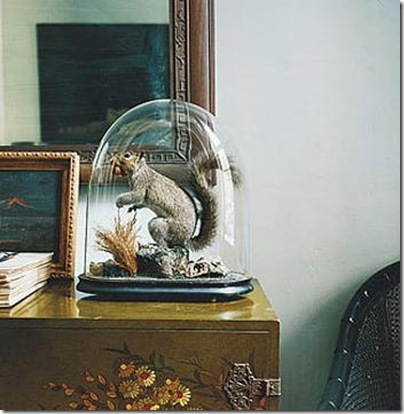 squirrel under cloche