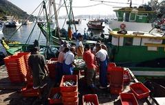 Pescadores da colônia de pesca de Jurujuba, em Niterói, reclamam de prejuízo no período de defeso da sardinha / Foto: Custódio Coimbra