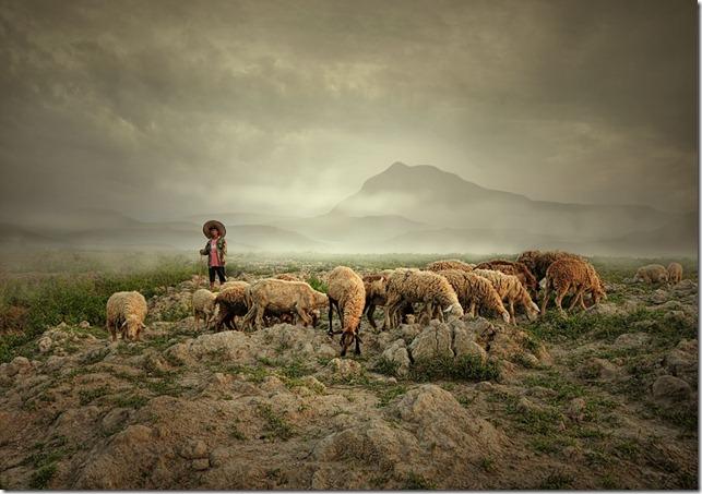 Shepherd by Teuku Jody Zulkarnaen