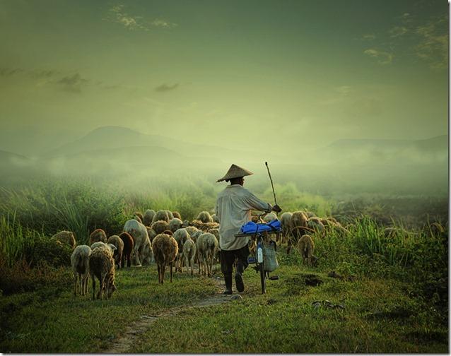 shepherd #2 by Adrian Donoghue