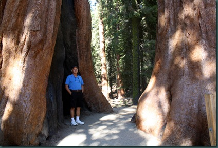 Sequoia National Park 162