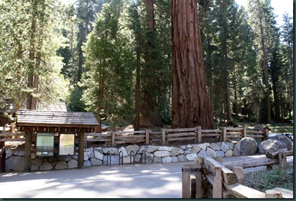 Sequoia National Park 122