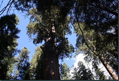 Sequoia National Park 197