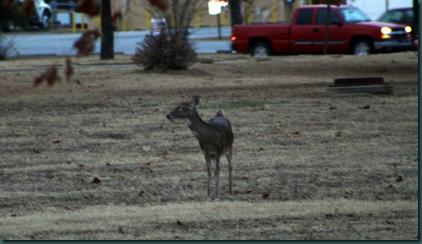 Deer 019