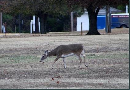 Deer @ McAlester 034