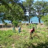 Pinda's oogsten