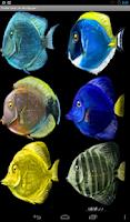Screenshot of Choose Fishes Live Wallpaper