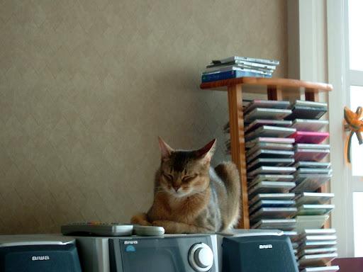 졸린 고양이 바토 [고양이,고양이키우기,고양이집사,반려묘,cat]