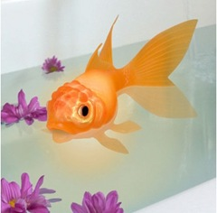 color-changing-goldfish
