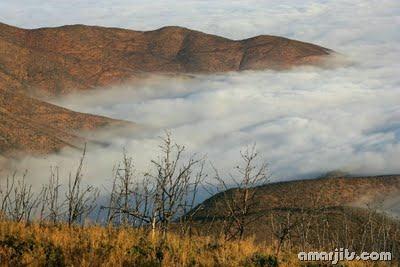 Fog_amarjits (12)