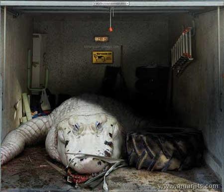 Garage-amarjits-com (4)