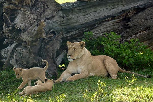 [joy new cubs[4].jpg]