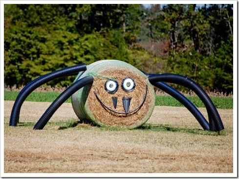 spider (1 of 1)