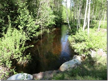 Skogsback2