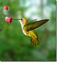 699hummingbird