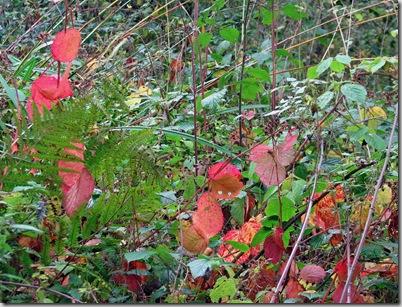 20081104 BHW Cpt 3c autumn brambles