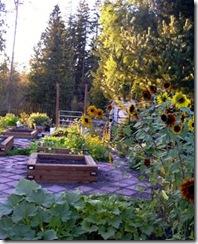Garden planted 2003_300
