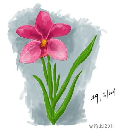 plantOrkid2