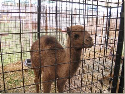 Medina Fair 2009 007