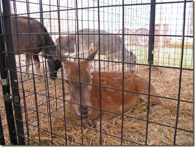 Medina Fair 2009 005