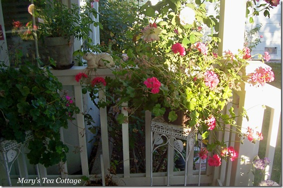 geraniums on porch 3