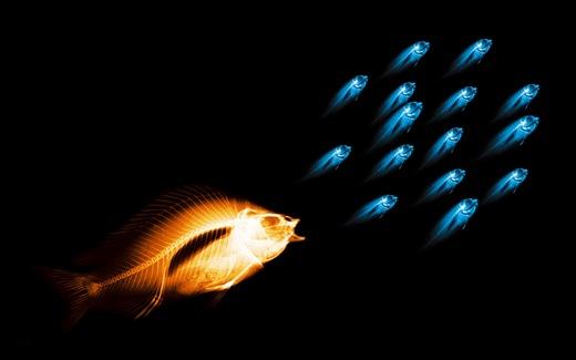 (6)HD-X-Ray-View-Desktop-Wallpaper- fish