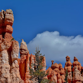 Hoodoos in Bryce Canyon by Erin Czech - Landscapes Caves & Formations ( desert, utah, rock, hoodoos, bryce canyon )