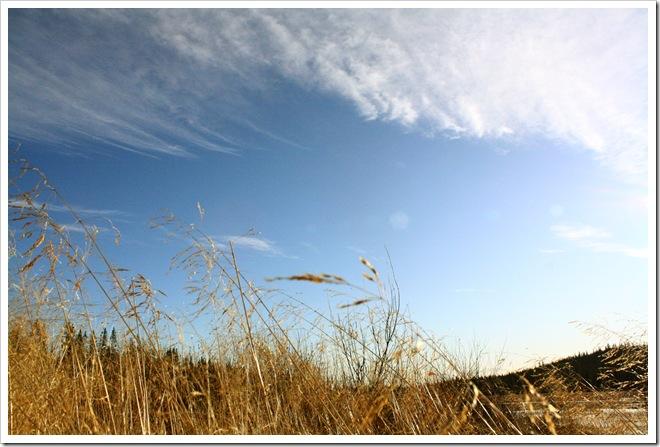 dead grass3