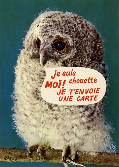 Cartes Postales Pop et  Kitsch des années 50, 70 et 70 - Pop and kitsch vintage postcards from the fifties, the sixties and the seventies : Rions avec les animaux