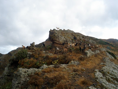 Photo of  Tenerife. Barranco de Ijuana