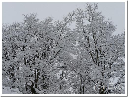 Dezember 2010 020