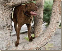 Bravo In Tree 2
