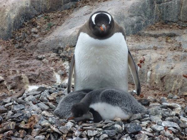13. pinguini.JPG