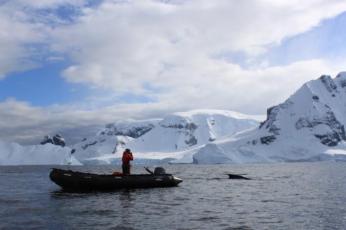 20. Balena in Antarctica.JPG