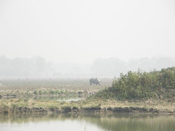 Imagini India: primul rinocer.JPG