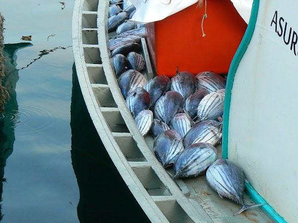 Imagini Maldive: pesti gata de livrare.JPG