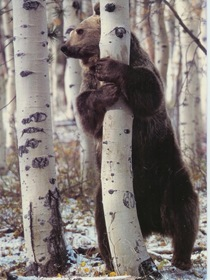 list of major species bears_www.wonders-world.com_