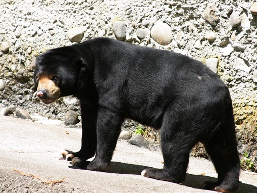 list of major species bears_www.wonders-world.com_1204