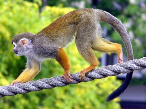 Top 10 List of Exotic Pets_www.wonders-world.com_10