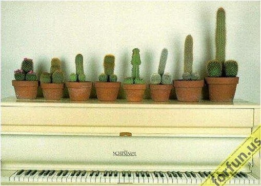 Most Suggestive Cacti On Earth 282
