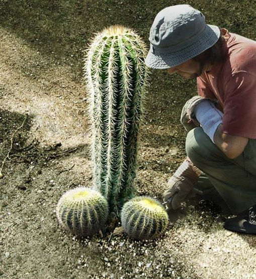 Most Suggestive Cacti On Earth 290