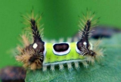 Insects-that-look-like-aliens-004