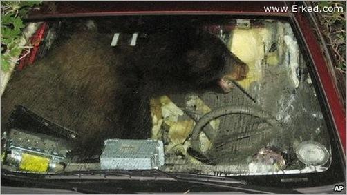 animals-attacking-cars-14