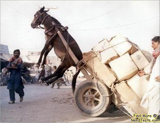 funny moment donkey life 11