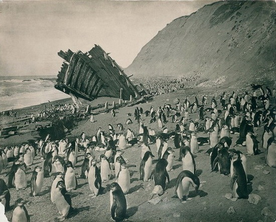 antarctica_100_years_later_08