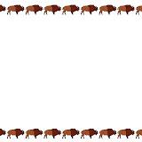 bisonte.jpg