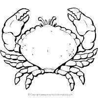 crab 2.jpg